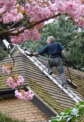 Our staff cleaning the moss from a roof in Reigate in Surrey